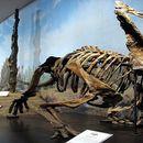 Дете пронајде редок скелет на диносаурус во Канада