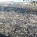 Пожар во атарот на општина Карбинци, опожарени две вили