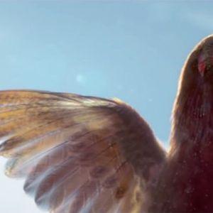 """""""Кокошка против мисирка"""" е епскиот празничен двобој на KFC"""