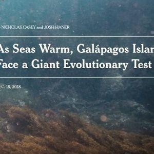 Репортери од Њујорк Тајмс ги откриваат страшните последици на климатските промени врз еко системот на Галапагос