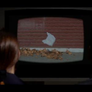 """И по 20 години, познатата кеса од филмот """"Американска убавина"""" сè уште ја загадува Земјата"""