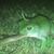 Вакво нешто немате видено: Жаба проголтува цела змија