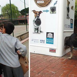 Позитив на денот: Корпа за рециклирање пластика која храни кучиња скитници, ќе ве воодушеви