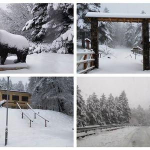 Снежна бајка на Пелистер: Првиот снег ги кани сите на уживање во чист воздух