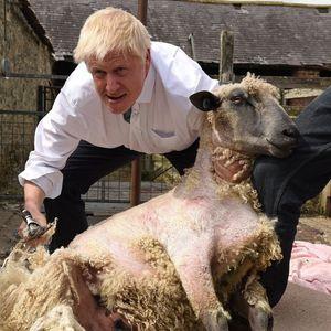 ПРАВИ СЀ ЗА ГЛАСОВИ: Британскиот премиер стpиже овци, продава риби, вози формула, игра фудбал…