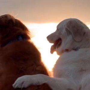 Кучето Кико има рак, а неговиот брат го чувствува тоа: Една приказна што допира