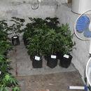 U okolini Nove Crnje otkrivena laboratorija za proizvodnju marihuane