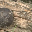 Civil War cannonball discovered lodged in a tree at historic Missouri house