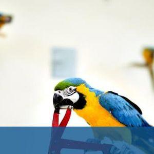 """""""Птичите мозъци"""" са по-умни, отколкото предполагаме"""