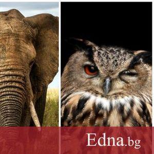 Тест: избери духовно животно и научи скритото послание