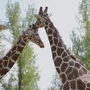 Зоолошката градина во Скопје од утре почнува со работа