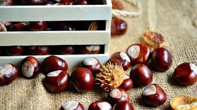 LEK IZ PRIRODE - KESTEN: Plod koji čuva srce i bubrege, pun magnezijuma i vitamina C