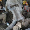 Останките на 60 мамута открити при строеж в столицата на Мексико