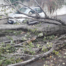 Ветерот во Скопје туркаше дрвја и оштети неколку лимени покриви