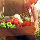 Зголемено органското производство на житата, овошките и грозјето, драстичен пад кај индустриските култури