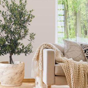 Засадете си маслиново дрво во саксија и користитете ги неговите лековити моќи