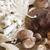 Гъбите шийтаке укрепват имунната система