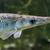 Риба скочи в лодка и прониза шията на младеж