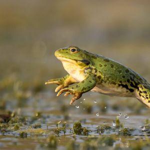 Нашествие на жаби във Флорида