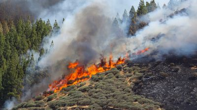 Изпратиха заподозрения за пожара на остров Гран Канария в предварителен арест
