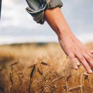 Задължителен земеделски труд за безработните?