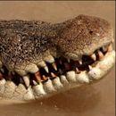 HOROR NA FILIPINIMA Krokodil izvukao dečaka (10) iz čamca i POJEO GA pred bratom i sestrom