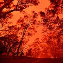 DRAMATIČNO UPOZORENJE Ako se Zemlja zagreje za samo tri stepena, požari poput australijskih postaće NORMALNA STVAR