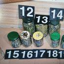"""""""PALA"""" TRI DILERA Uhapšeni u okviru akcije """"Gnev"""", u stanu jednog pronađena laboratorija za uzgoj marihuane i 15 teglica sa drogom"""