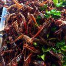 Расте популарноста на специјалитетите со инсекти