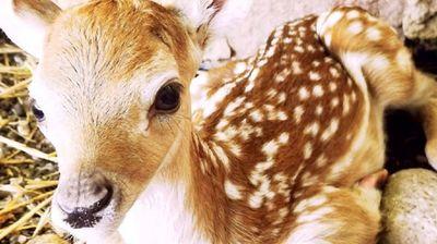 Зоолошката во Скопје доби нов член – истражувачот Лаки