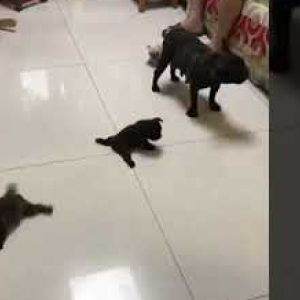 Кученца Vs лизгав под
