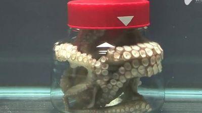 Овој паметен октопод успеа да побегне од затворена тегла