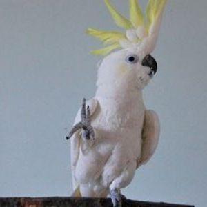 Овој папагал го зачуди целиот свет: Нема да верувате што му направи на малиот леминг
