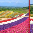 Опуштете се и уживајте: Оваа цветна градина е вистински рај на Земјата