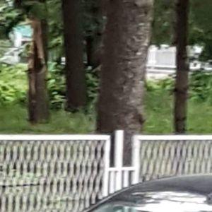 Гром удри во дрво во дворот на гимназијата Мирко Милески – Кичево