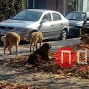 ОВР Кичево: Изминатото деноноќие пријавени два случаи на нападнати граѓани од кучиња скитници