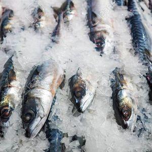 Замрзнале риба во фрижидер, но во топла вода рибата оживела!