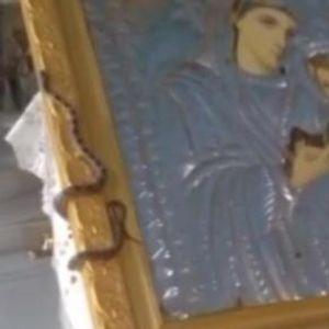 Видео: На Голема Богородица црквата е полна со змии - мештаните доаѓаат да ги погалат