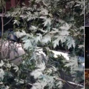 ВИДЕО: Невреме во регионот - дрва и вода по улиците