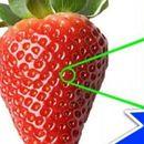 Повеќе нема да ви падне на памет да јадете јагоди пред да ги измиете - ова го има во днивните дупчиња