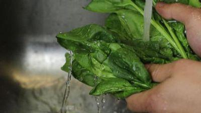 Оваа моќна билка има лековити својства- најдобро е да ја конзумирате свежа, а помага и во спречување на рак