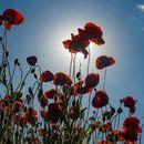 После пријатно и сончево утро следи дожд, а од утре пеколни температури