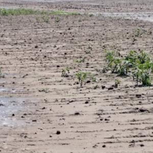 Големи штети од невремето во Македонија - уништени земјоделските посеви