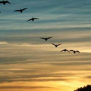 Глетка како од хорор филм во Австралија: Птици паѓале од небото со крв во очите