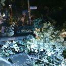 Силно невреме во Скопје - Се сруши огромно дрво