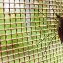 Трик кој проверено делува: Oслободете се од комарците за секунда – потребни ви се само две состојки