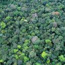 Среде Амазонската прашума откриле ѕид од ледено доба: Научниците изненадени од деталите на него