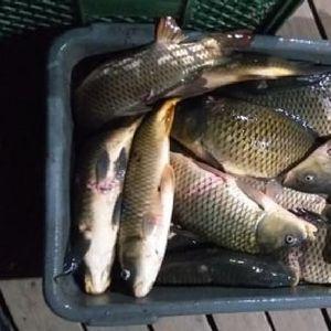 Četvoro uhvaćeno u krivolovu na Skadarskom jezeru