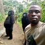 Две горила позираат како луѓе, совршено селфи направено во Конго