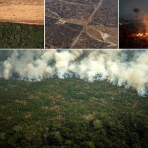 """Дождовните шуми во Амазонија се """"белите дробови"""" на Земјата"""
